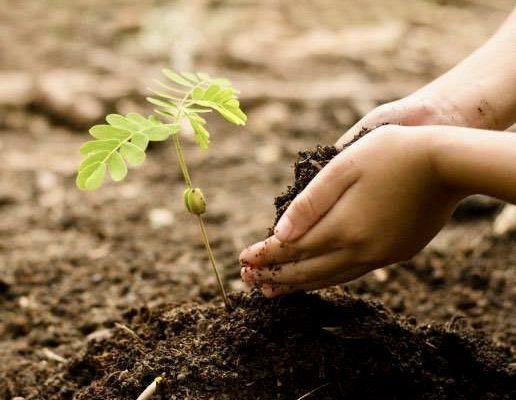 Naša zelena oaza 0000